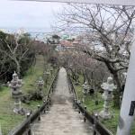 「名護城跡」付近の開花状況①(2016年2月2日)