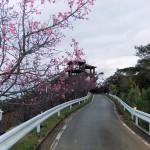 頂上の「天上展望台」付近の開花状況⑤(2016年2月2日)