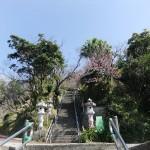 「名護城跡」付近の開花状況⑥(2016年2月9日)