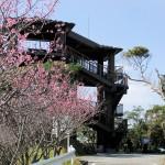 頂上の「天上展望台」付近の開花状況⑧(2016年2月9日)